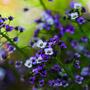 Весною пахнет