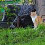 Сейчас территорию он свою освоил. С соседским старым матерым котом установил нейтралитет и четкие границы.