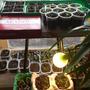 Посоветуйте, как решить вопрос с размещением домашнего огорода на подоконнике?