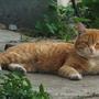 Вот еще соседский кот смотрит, как котенок рос)