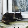Соседская кошка всегда наблюдает, как котенок у дома гуляет)
