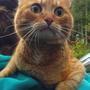 Это котик городской - гость трусишка вот такой)