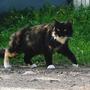 Кошка снова наблюдает - где наш Лунтик точно знает!