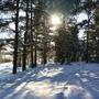 Намело, навьюжило. Все деревья в кружеве, Снег на соснах и кустах, В белых шубках ели.