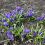 Синяя полянка