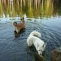 Гурыч любит плавать, а Леля - нет.