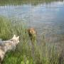И снова озеро