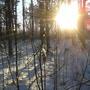 Приятно прогуляться в лесу, когда ярко светит солнце.