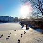 Несмотря на мороз, даже птицы в приподнятом настроении))