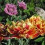 Жар-Птицы в весеннем саду!