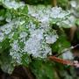 Весна в снегу