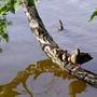 Утиное семейство на пруду...