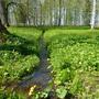 Гонец весны - лесной ручей - бежит с хрустальным звоном...