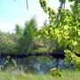 Один из наших дачных прудов в мае...