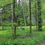 В майском лесу...