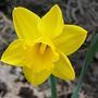 Солнечный цветок...