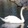 В весеннем пруду...