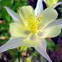Бело-жёлтая нежность...