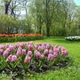 Разноцветная весна...