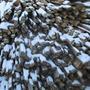 Нераспиленные дрова.