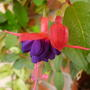 Танцующий цветок