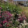 Цветник вдоль домика