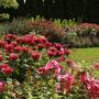 Яркий цветник в красно-малиновых тонах