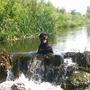 Начну рассказ с того, что этот сад мы купили благодаря ей. В молодости Кайла была спортивной собакой, но случилась травма, три операции, во время реабилитации возили на реки и озера плавать Кайлу каждый день.