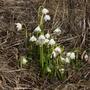 Вот и пришла весна на нашу дачу!