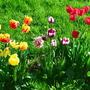 Разноцветье!