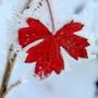 Колючие объятия зимы