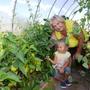 Бабушка и внучка оценивают виды на урожай. В теплице томаты 22 сортов, перец 5 сортов, баклажаны 10 сортов.