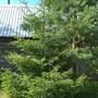 Просто прелестно - уголок леса на даче