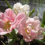 Весна на подоконнике!