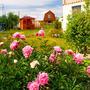 Весна пришла в мой сад....