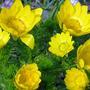 Забрызгал дождик золотом цветы...