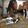 Привет, малыш - я твоя мама! *на соседнем фермерском хозяйстве*