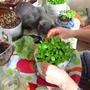 "Наращиваем ""улитки"", конечно, вместе с вездесущим котом Витасом!"