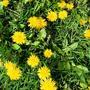 Маленькие портреты большого солнышка - Весна!
