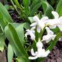 Цветы из белого фаянса