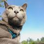 Наш любимый кот Витас уже седьмое лето проводит с нами на нашей даче. За это время он стал степенным и мудрым. Не разменивается на мелкие кошачьи шалости, ведёт себя достойно, как и подобает приличному коту.