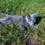 Витас очень любит понежиться на солнышке