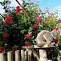 На даче Витас - хозяин, он не просто кот, а служащий на дачной таможне кот, у него есть специальное место - таможня, мимо которой никто просто так не пройдёт.