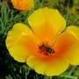 Нектар в жёлтом блюдце