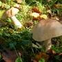 Дачные грибочки