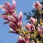 Мы приветствуем  тебя,  Весна  !