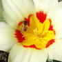 Пчелиный маяк