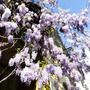 Весенний гроздьепад