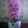 Бисерный гиацинт