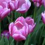 Красивый цвет